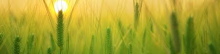Monsanto Vanity Fair Ethical Analysis Of Monsanto U2013 Analyzing The Ethics Behind