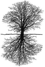 tree mirror phone wallpaper by roozter81
