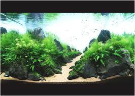aquascape aquarium designs fresh modern aquarium design with