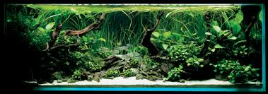 Aquascape Malaysia Weekly Topic How To Make Your Own White Sand Foreground