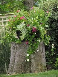 best 25 tree garden ideas on pinterest trees to plant growing