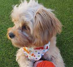 designer bandanas for dogs cats puppies in beautiful retro