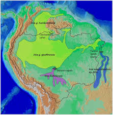 amazon basin distribution map of all known species and subspecies of inia