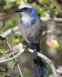 Florida Backyard Birds - 358 best bird carvings images on pinterest animals carving and