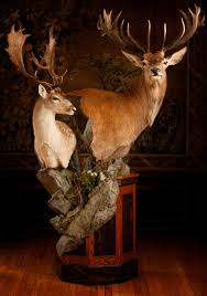 Deer Pedestal Taxidermy By Josh Hunt New Zealand Australia Scotland