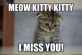 Cute Kittens Meme - meow kitty kitty i miss you quotes and memes pinterest kitty