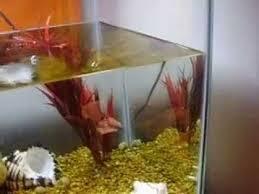 converting aquarium to half land half water terrarium part 1 youtube