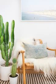 large houseplants oversized house plants large indoor plants