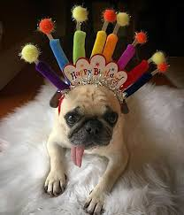 Pug Birthday Meme - birthday pug party pugs pinterest birthday pug birthdays and