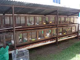 Rabbit Hutch Plans Build Wood Deck Over Concrete Steps How To Build A Box Rabbit