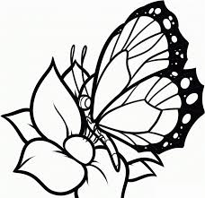 coloring pages paisley hearts and flowers anti stress free