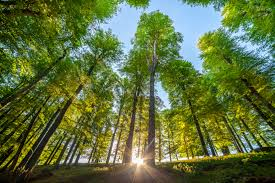5 trends that will define the world u0027s forests in 2016 climate