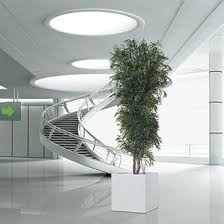 M Interior Design by Interior Trees And Plants For Interior Design Compositions Gaja