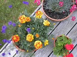 10 container garden ideas that are cheap or free