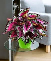beautiful house plants what is the most beautiful looking house plant quora