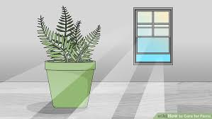 the 2 best ways to care for ferns wikihow