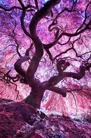 359 best trees images on nature trees and photography