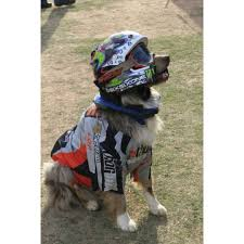animal motocross helmet 11 athletic costumes so your dog can score some major halloween