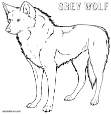 wolf coloring pages coloring pages to download and print