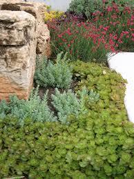 Drought Tolerant Backyard Ideas 429 Best Drought Tolerant Gardens Images On Pinterest Beautiful