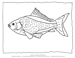 goldfish coloring blank 8 goldfish picture color