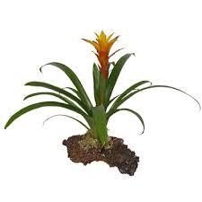Tropical Rainforest Plant Species List - tropical plant list garden list of plant names tropical