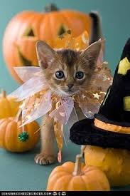 imagenes de halloween town 35 creative halloween costumes for pets kitty google images and cat