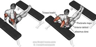 bench dip exercise instructions and video weight training guide