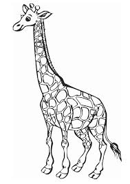 sweet giraffe coloring animal pages kidscoloringpage org