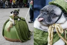 26 costumes that prove pugs always win at