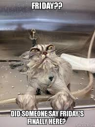 Finally Friday Meme - friday did someone say friday s finally here cat bath returns