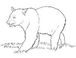brown bears coloring pages young bear pictures of animal grizzly