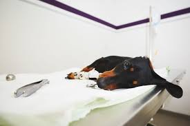 due to spinal cord injury in dogs symptoms causes diagnosis