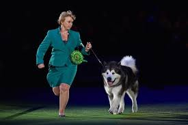 boxer dog crufts 2015 crufts 2017 first day winners results and full schedule as
