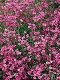Best Plants For Rock Gardens 10 Best Rock Garden Plants Images On Pinterest Rock Garden