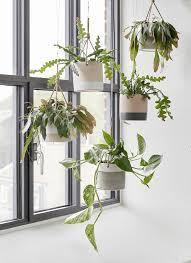 Decorative Indoor Planters 495 Best Plant Images On Pinterest Plants Indoor Plants And