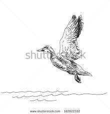 vector illustration sketch duck flying over stock vector 182622332