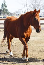 Nice Hourse Companion Horses U2013 Colorado Horse Rescue