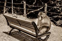 Monkey Bench Armrest Definition And Meaning