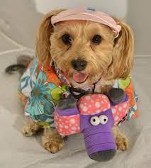 Yorkie Halloween Costumes Tacky Tourist Yourdesignerdog
