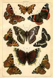 instant art printable antique butterflies and moths the