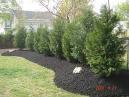 Privacy Backyard Ideas by 37 Best Back Wooded Area Garden Ideas Images On Pinterest