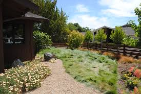 california native plant garden design low or mow free native lawns julie orr design