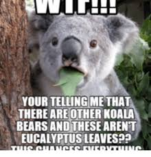 Koala Meme - your telling methat there are other koala bears and these arent