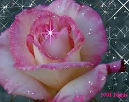 Meaning Of Pink Roses Flowers - 87 best roses u0026 other beautiful flowers images on pinterest