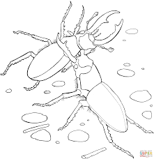 free beetles insect coloring pages kids printable