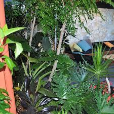 Tropical Plants Perth Blog Cultivart Landscape Design