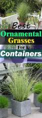 how to plant native grasses best 25 ornamental grasses for shade ideas on pinterest grasses