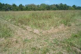 plants native to alabama blackland prairie restoration