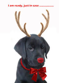 Free Printable Halloween Greeting Cards by Christmas Dog Replacing Rudolph Free Printable Greeting Cards